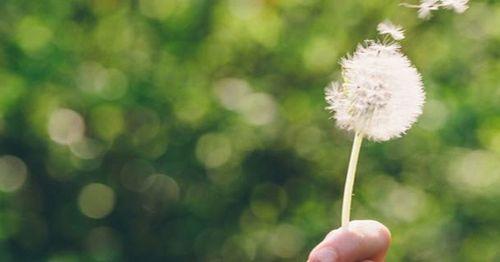 Apa Penyebab Gejala Alergi Serbuk Sari Namun Anda harus selalu ingat